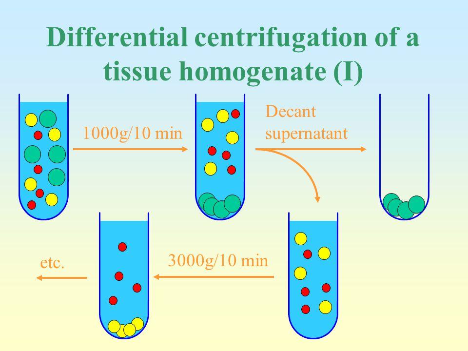 Differential centrifugation of a tissue homogenate (I) 1000g/10 min Decant supernatant 3000g/10 min etc.