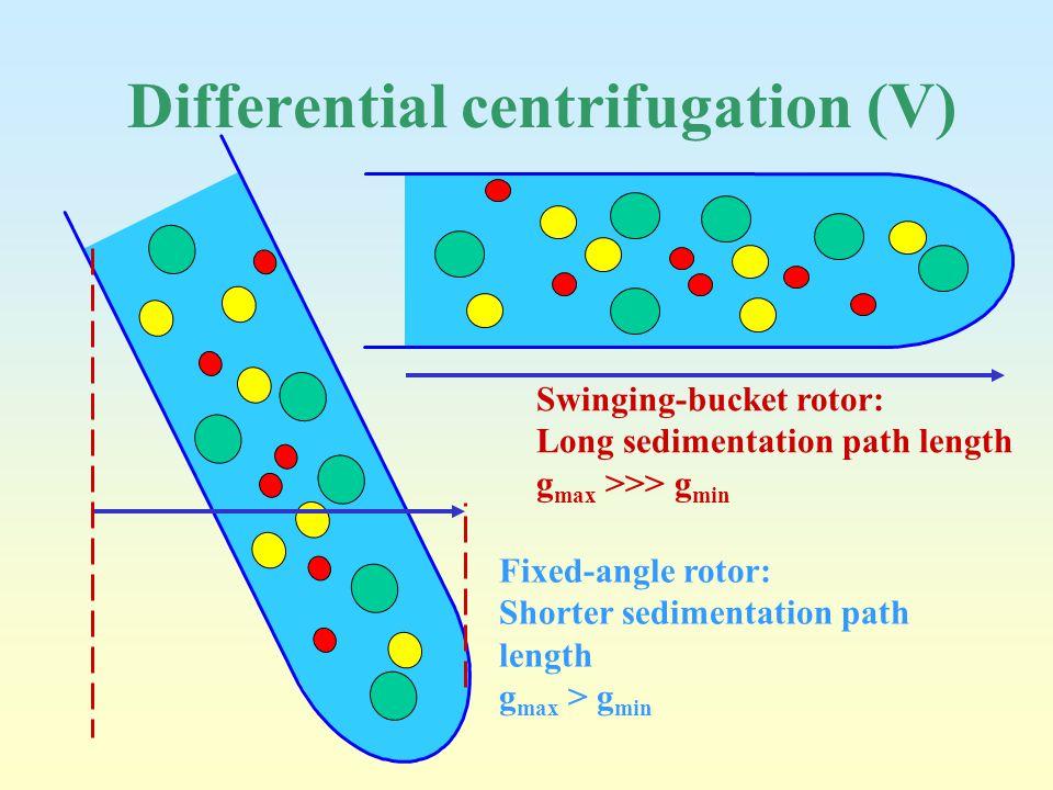 Differential centrifugation (V) Fixed-angle rotor: Shorter sedimentation path length g max > g min Swinging-bucket rotor: Long sedimentation path leng