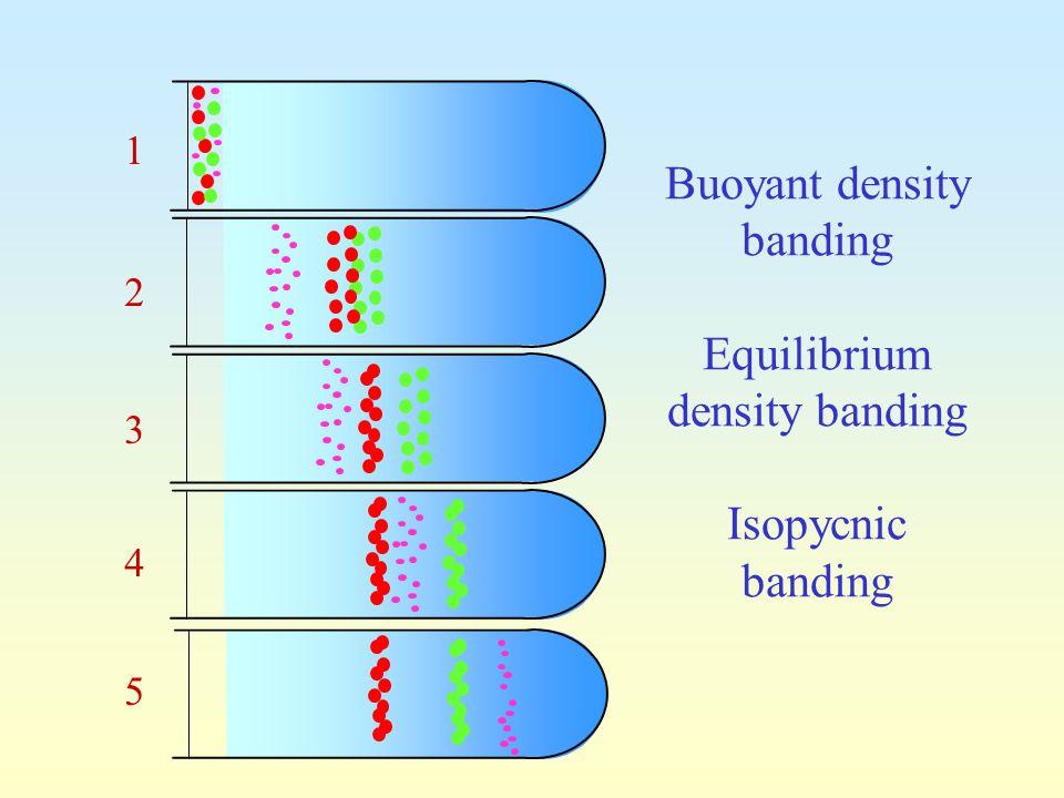 Buoyant density banding Equilibrium density banding Isopycnic banding 1 5 2 3 4