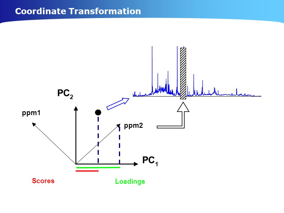 Coordinate Transformation Scores PC 1 PC 2 ppm1 ppm2 Loadings