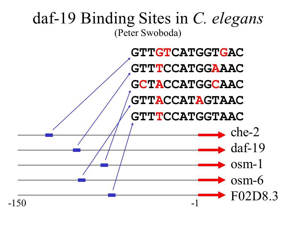 daf-19 Binding Sites in C.