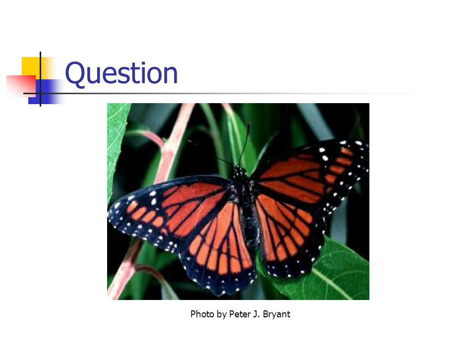 Question Photo by Peter J. Bryant