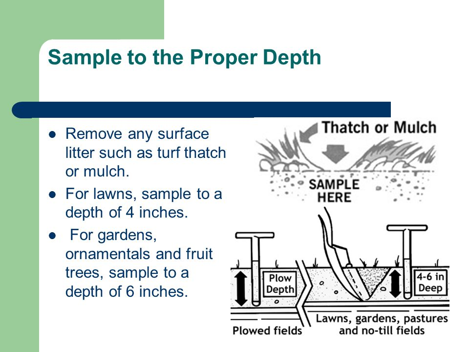 Sample to the Proper Depth Remove any surface litter such as turf thatch or mulch.