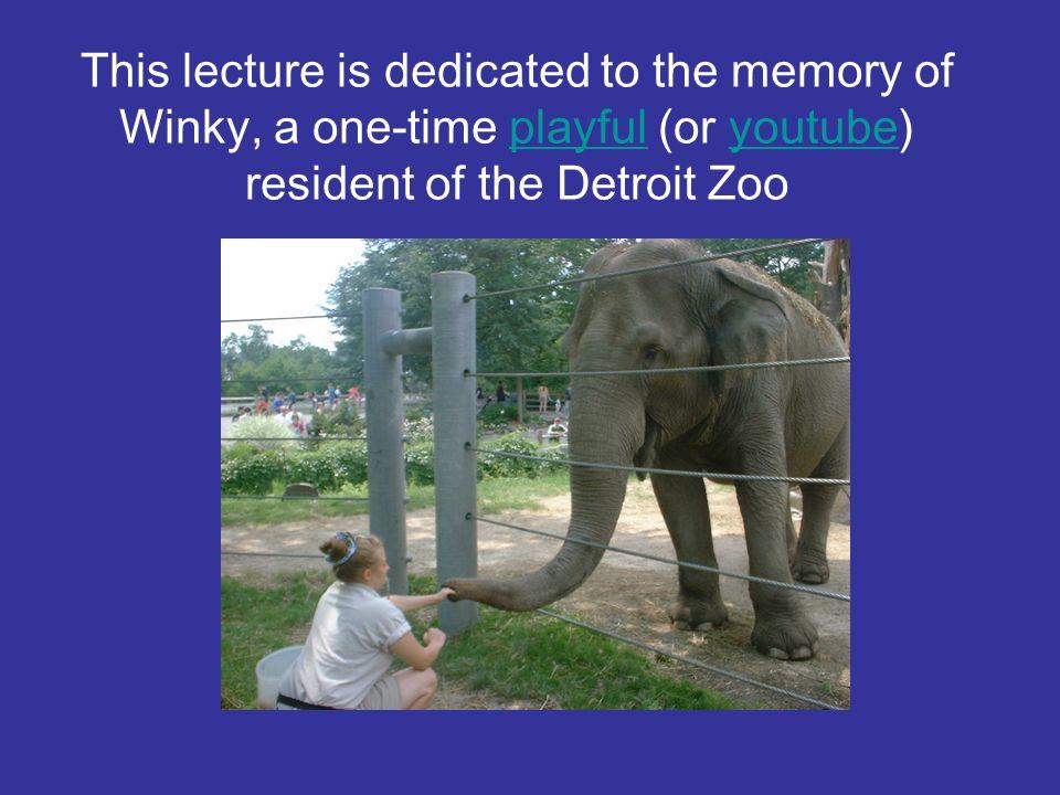 BIO 1030 Animal Behavior Unit Can Animals (especially elephants) Think.