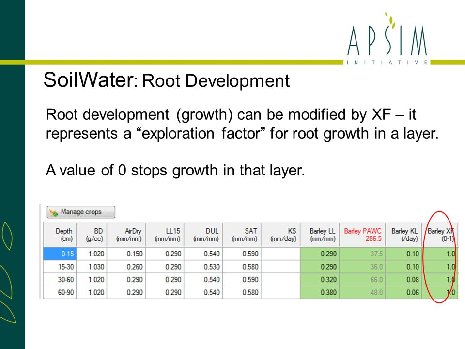 SoilWater : Root Development Root development (growth) can be modified by XF – it represents a exploration factor for root growth in a layer.