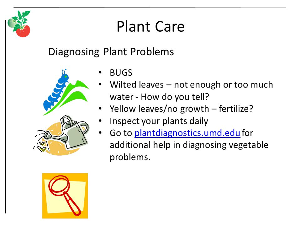 Plant Care BUGS Wilted leaves – not enough or too much water - How do you tell.