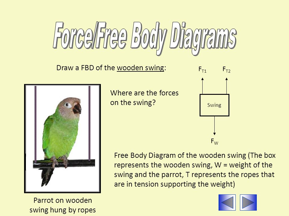 Parrot on wooden swing hung by ropes Draw a FBD of the wooden swing: Swing Free Body Diagram of the wooden swing (The box represents the wooden swing, W = weight of the swing and the parrot, T represents the ropes that are in tension supporting the weight) FWFW F T2 F T1 Where are the forces on the swing?