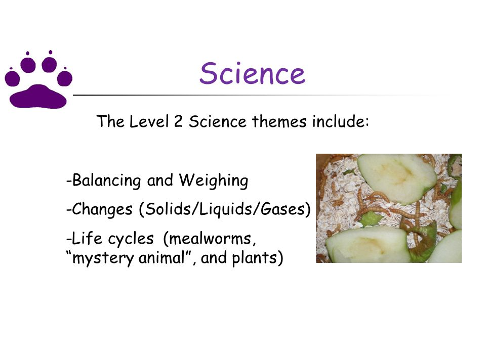 Science The Level 2 Science themes include: -Balancing and Weighing -Changes (Solids/Liquids/Gases) -Life cycles (mealworms, mystery animal , and plants)