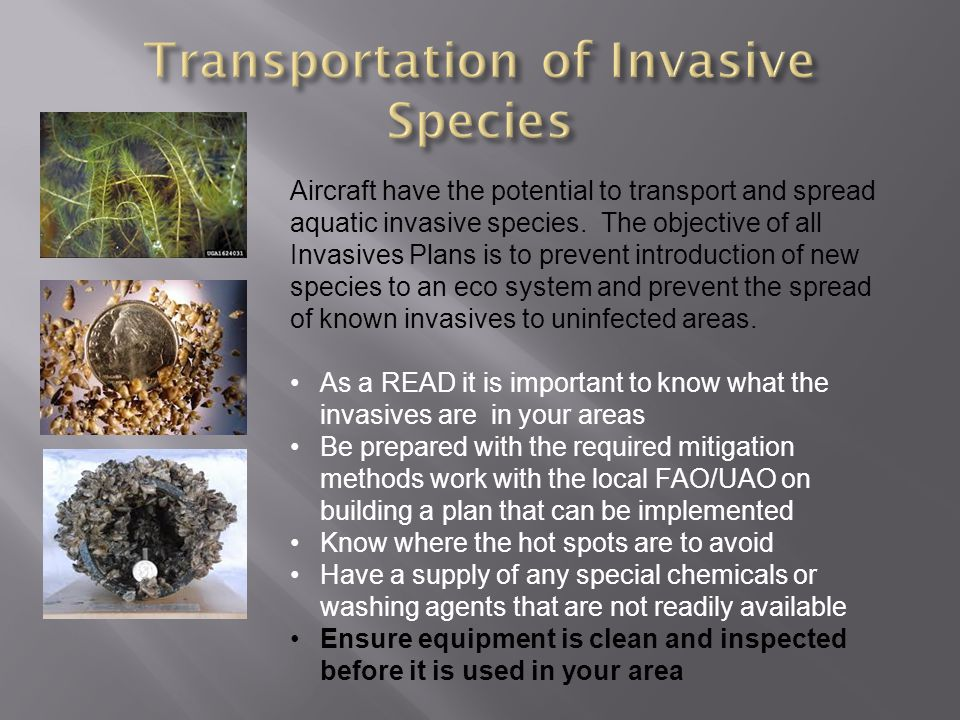 Aircraft have the potential to transport and spread aquatic invasive species.