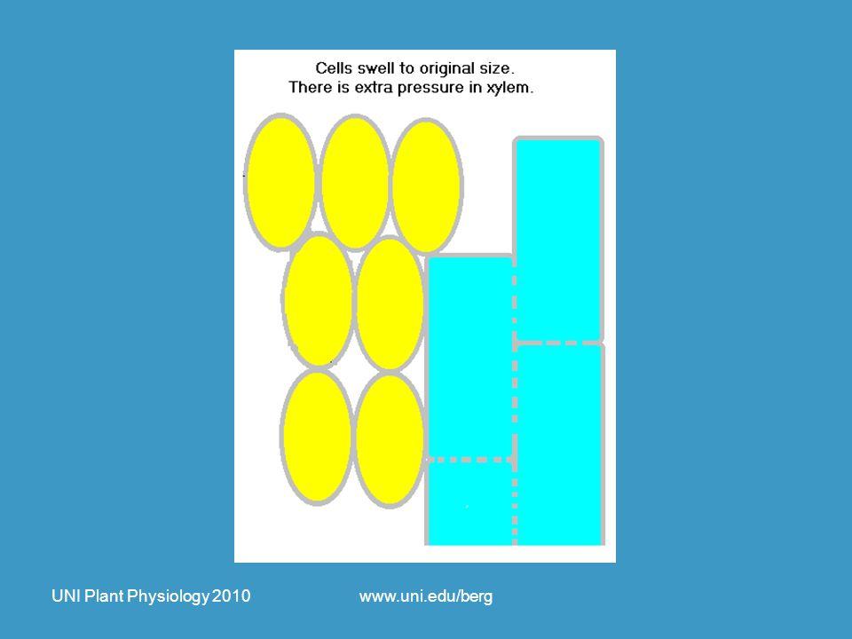 UNI Plant Physiology 2010www.uni.edu/berg