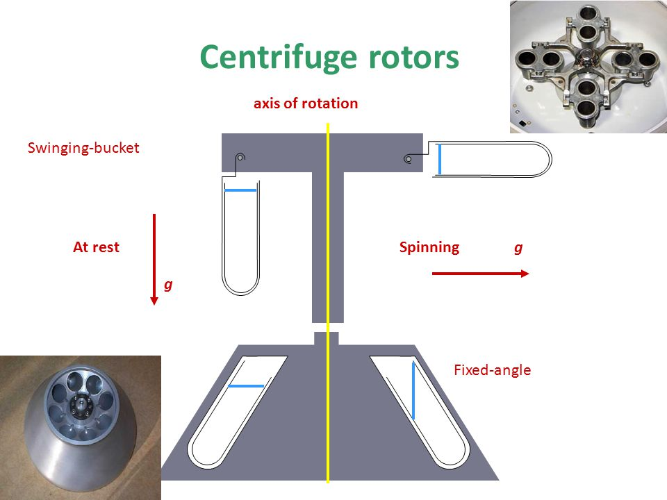Centrifuge rotors Fixed-angle axis of rotation At rest Swinging-bucket g Spinning g