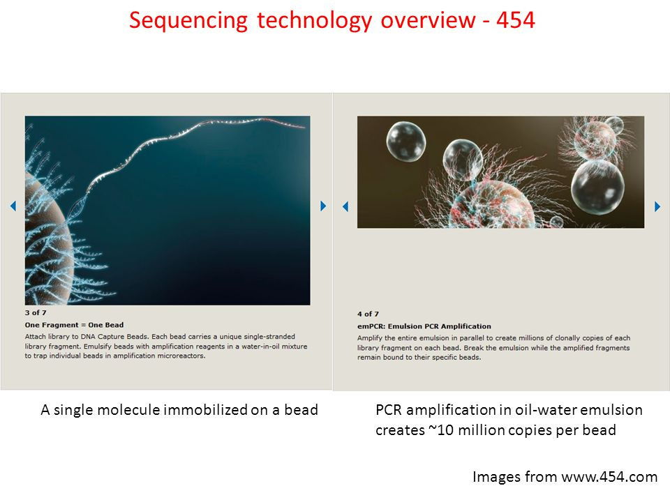 A single molecule immobilized on a beadPCR amplification in oil-water emulsion creates ~10 million copies per bead Images from www.454.com Sequencing technology overview - 454