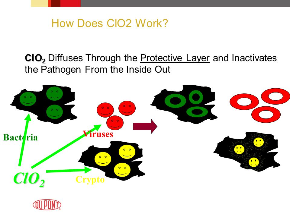 How Does ClO2 Work? ClO 2 ClO 2 Diffuses Through the Protective Layer and Inactivates the Pathogen From the Inside Out Bacteria ClO 2 Viruses Crypto