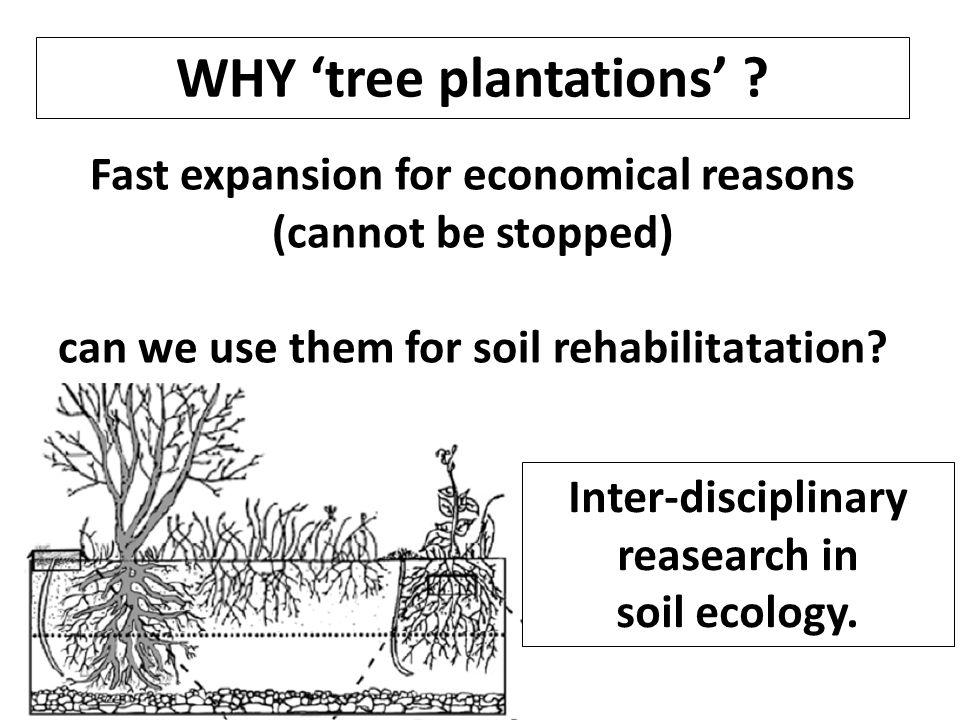 Fast expansion for economical reasons (cannot be stopped) can we use them for soil rehabilitatation.