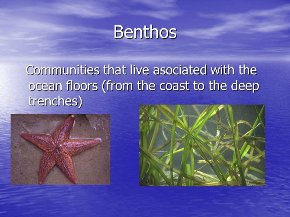 Benthos Communities that live asociated with the ocean floors (from the coast to the deep trenches) Communities that live asociated with the ocean floors (from the coast to the deep trenches)