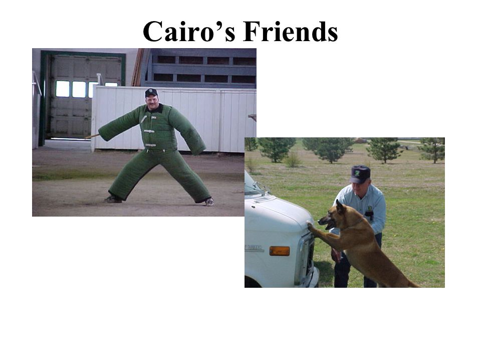 Cairo's Friends