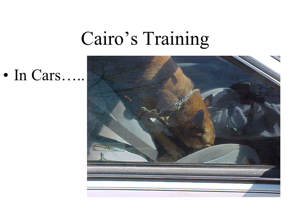Cairo's Training In Cars…..