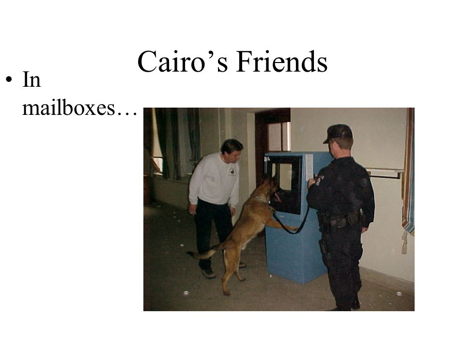Cairo's Friends In mailboxes…