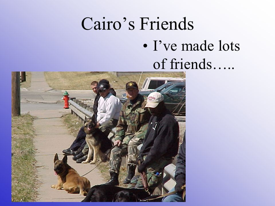 Cairo's Friends I've made lots of friends…..