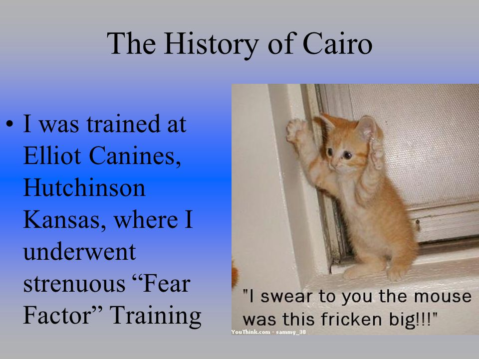 The History of Cairo I was trained at Elliot Canines, Hutchinson Kansas, where I underwent strenuous Fear Factor Training