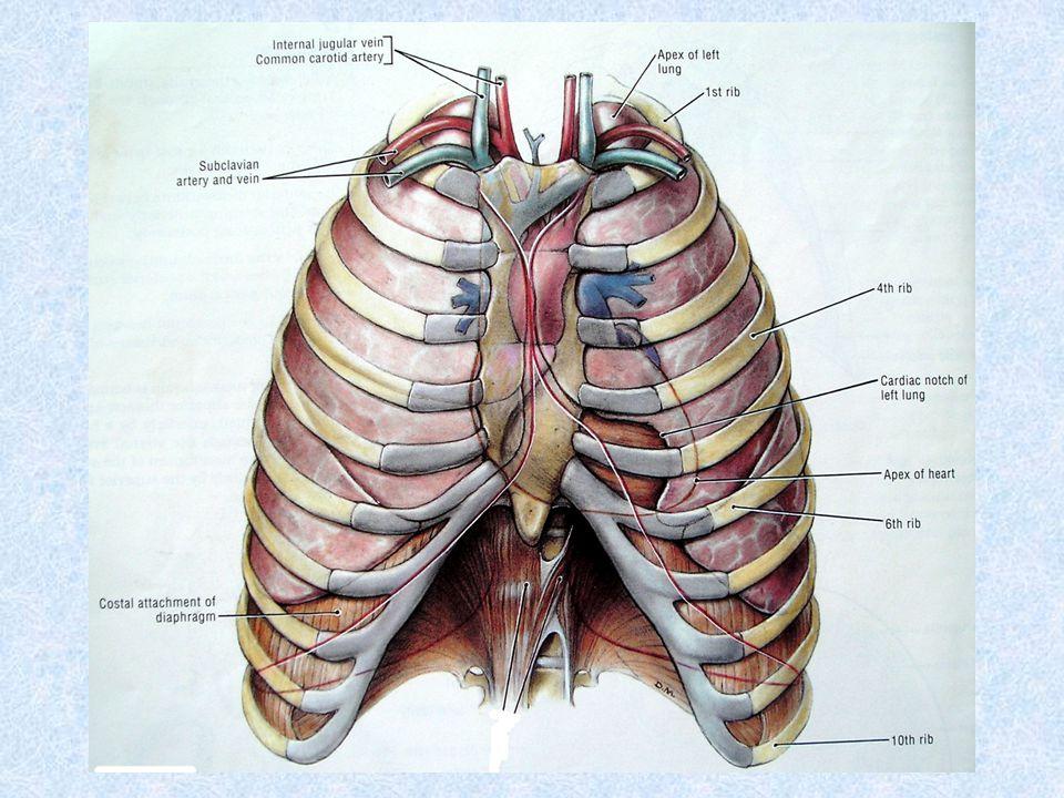 Thoracocentesis & intercostal nerve block