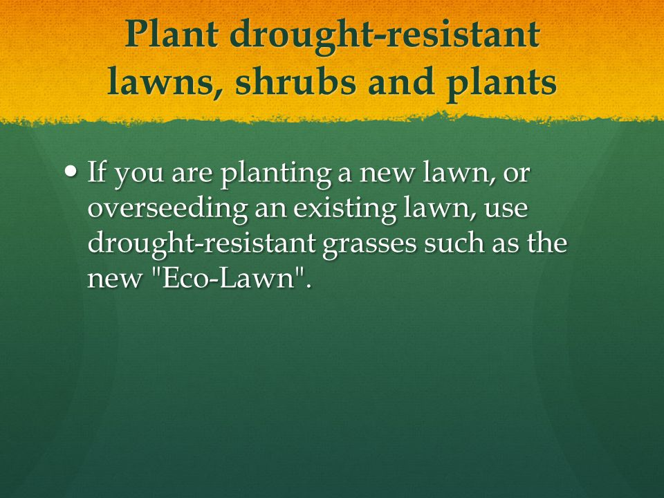 Plant drought-resistant lawns, shrubs and plants If you are planting a new lawn, or overseeding an existing lawn, use drought-resistant grasses such as the new Eco-Lawn .