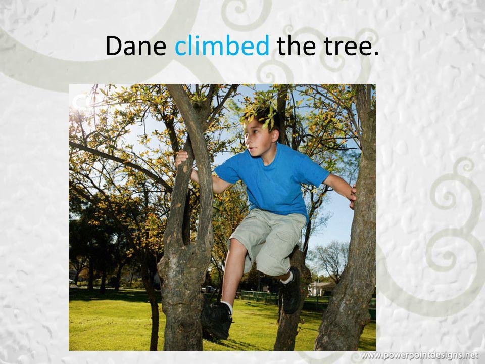 Dane climbed the tree.
