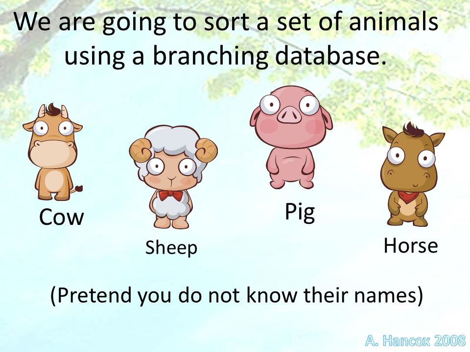 Cow Horse Pig Sheep We are going to sort a set of animals using a branching database.