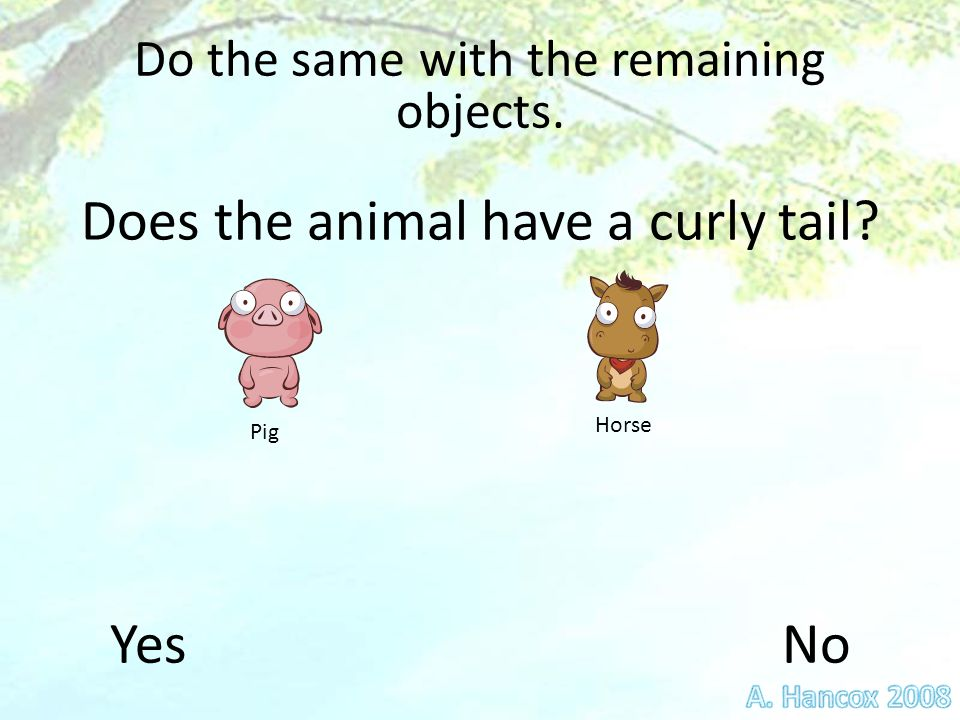 Do the same with the remaining objects. HorsePig Does the animal have a curly tail YesNo