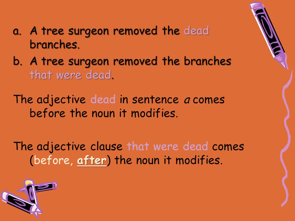 a.A tree surgeon removed the dead branches. b.A tree surgeon removed the branches that were dead. The adjective dead in sentence a comes before the no