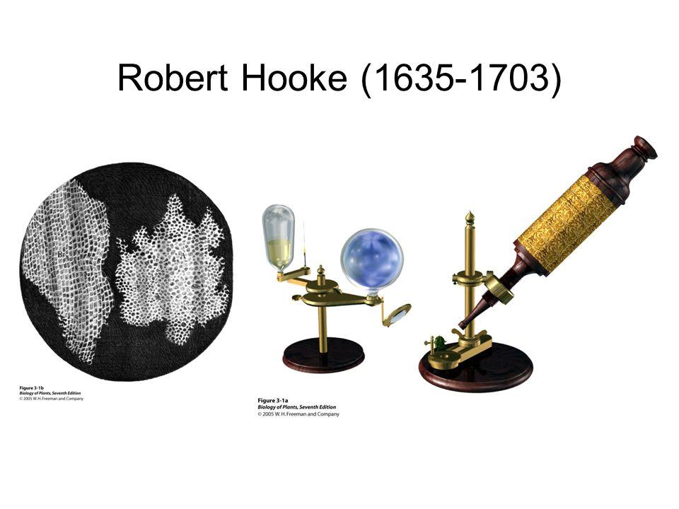 Robert Hooke (1635-1703)