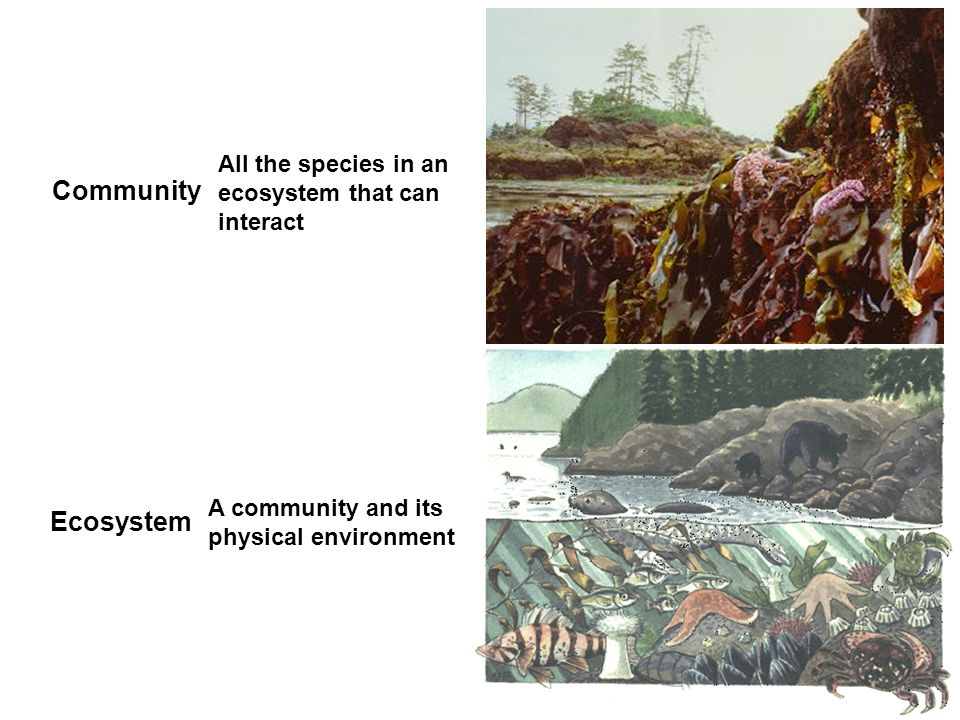 Community Ecosystem All the species in an ecosystem that can interact A community and its physical environment