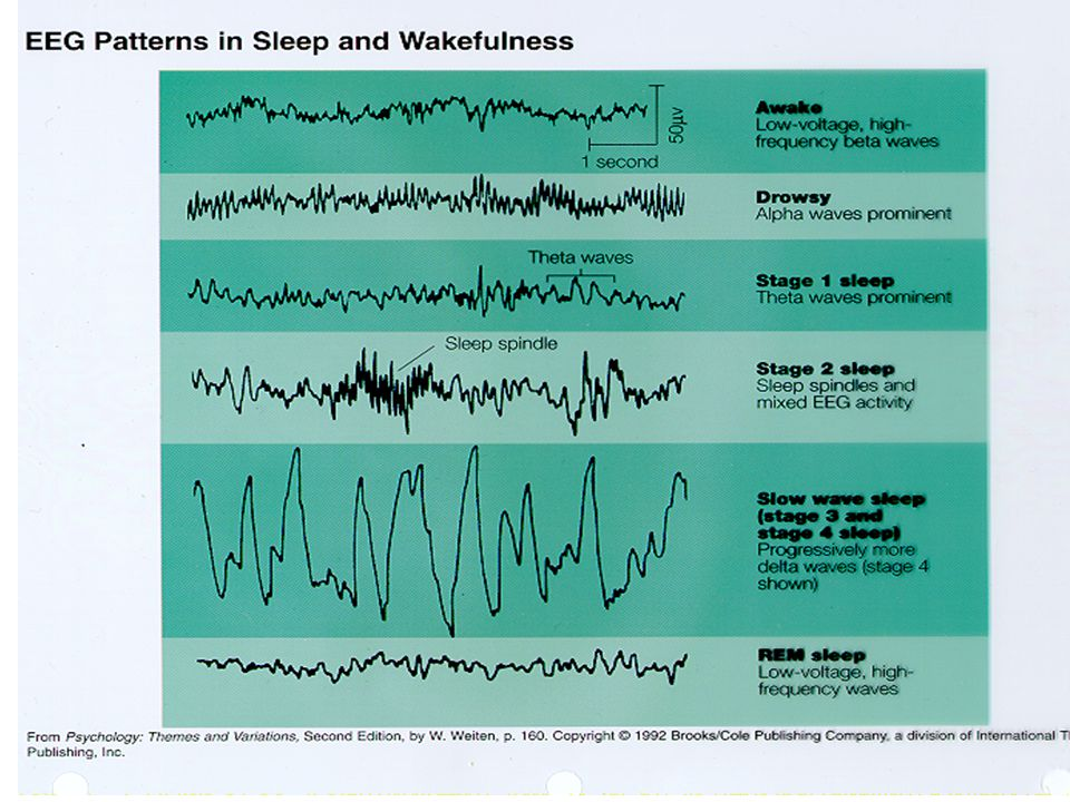 Melatonin  Can effect circadian rhythms and initiate sleep  Temporary effects  No long-term outcome studies