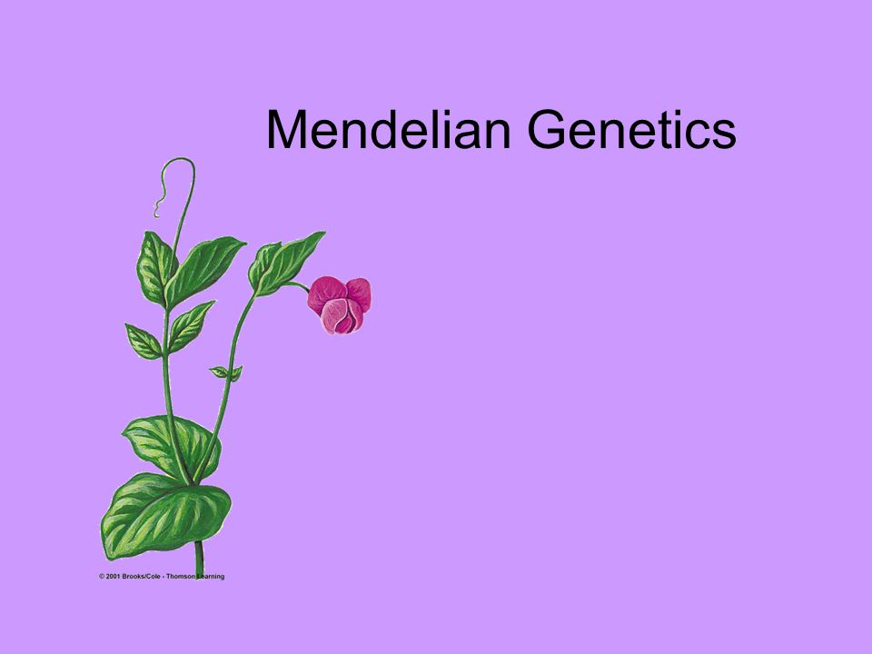 Genetics The study of heredity: Passing genetic traits from one generation to next.