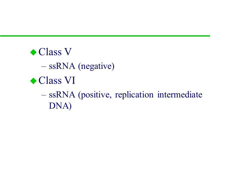 5. Viral classes u Class I –ds DNA u Class II –ssDNA (positive and negative) u Class III –dsRNA u Class IV –ssRNA (positive)