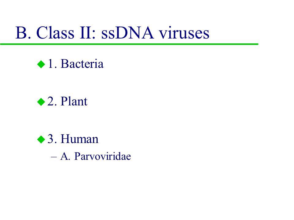 u 3. Human host –a. Herpesviridae –b. Adenoviridae –c.