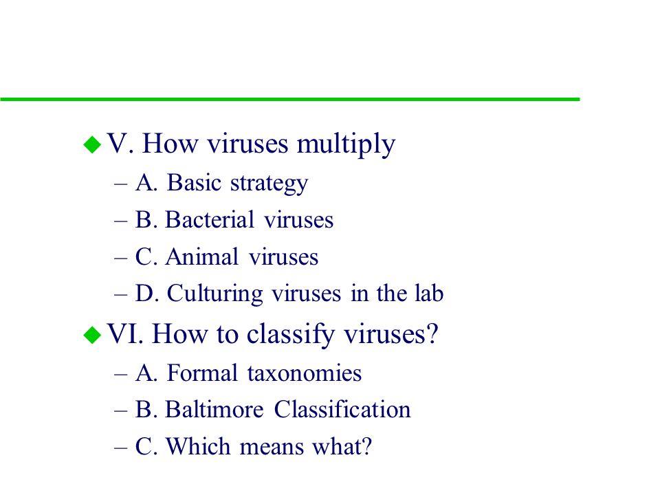 u V.How viruses multiply –A. Basic strategy –B. Bacterial viruses –C.