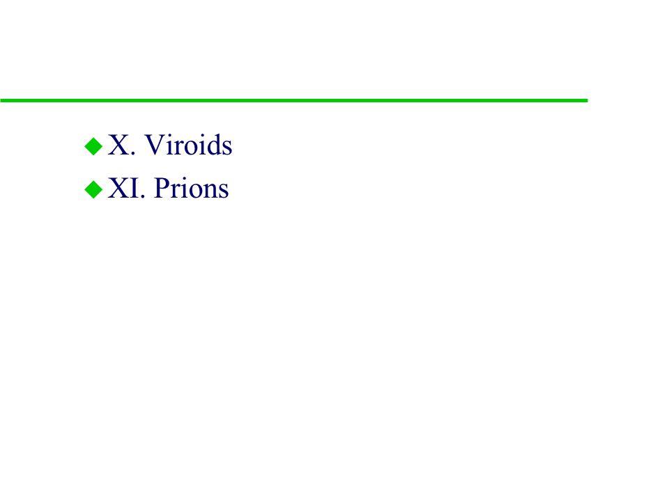 D. Culturing viruses in the lab u 1. bacteriophage u 2. animal viruses