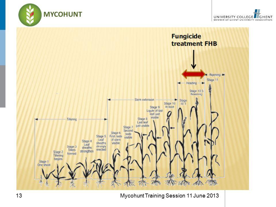 Mycohunt Training Session 11 June 201313