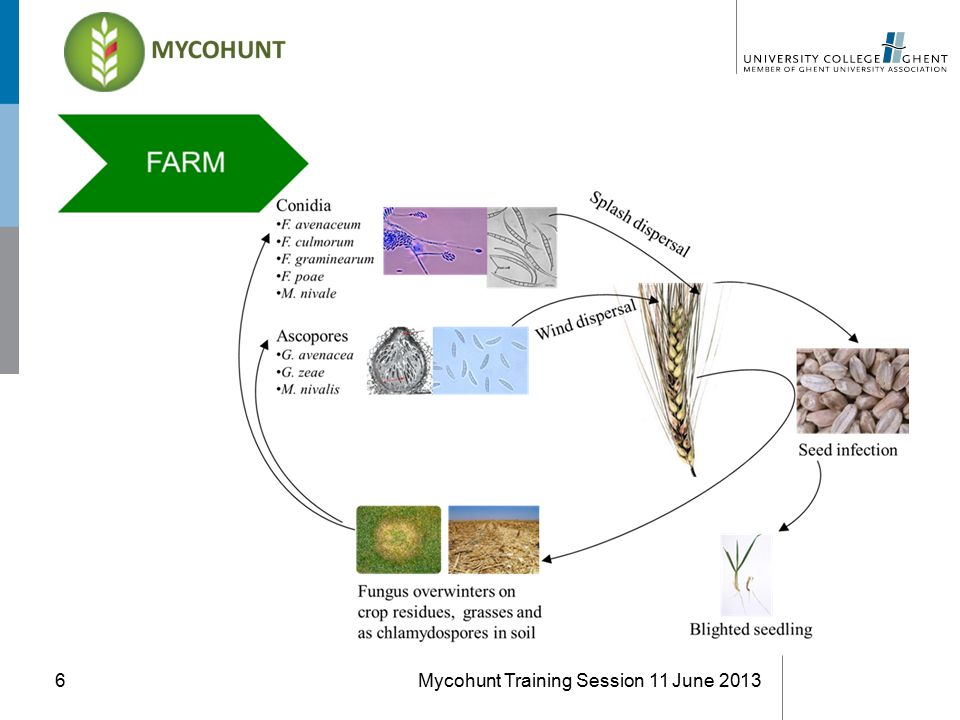 Mycohunt Training Session 11 June 20136