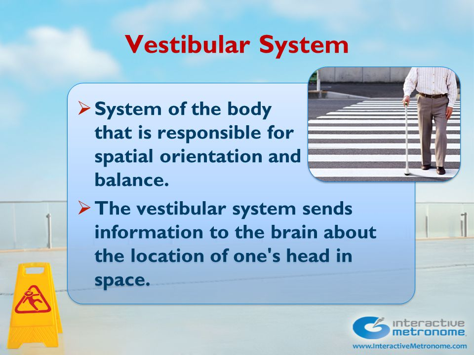 Vestibular System  System of the body that is responsible for spatial orientation and balance.