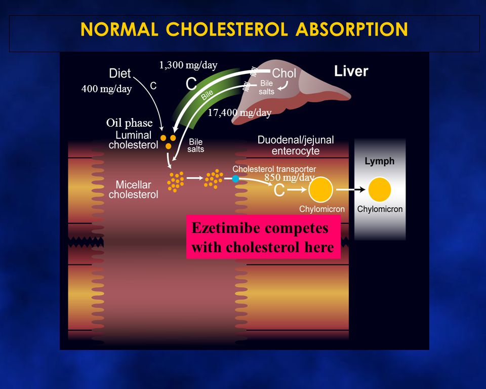 400 mg/day 1,300 mg/day 17,400 mg/day 850 mg/day NORMAL CHOLESTEROL ABSORPTION Ezetimibe competes with cholesterol here Oil phase