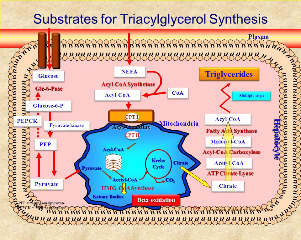 Structures of Fatty Acids C HO O C O C O C O C O 16:0 (palmitic) cis-18:1  -6 (oleic) trans-18:1  -6 (elaidic) 18:2  -6 (linoleic) 18:3  -3 (alpha linolenic) C HO O 20:5  -3 (EPA)