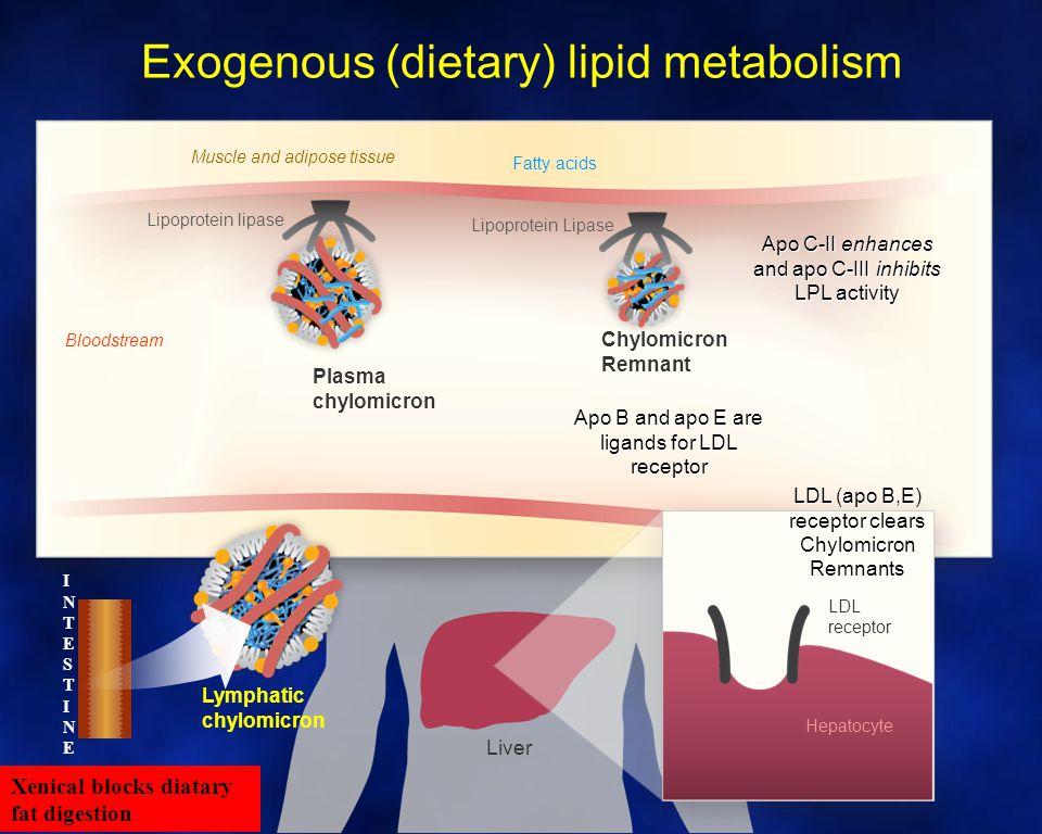 Liver VLDL Muscle and adipose tissue Lipoprotein lipase Lipoprotein Lipase And hepatic lipase IDL Fatty acids Bloodstream LDL receptor Hepatocyte LDL Endogenous (hepatic) lipid metabolism Apo C-II enhances and apo C-III inhibits LPL activity Apo B and apo E are ligands for LDL receptor LDL (apo B,E) receptor clears VLDL, IDL & LDL