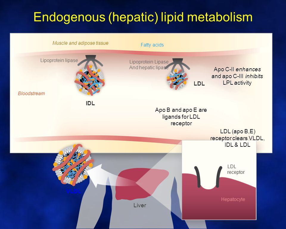 Clinical Hypertriglyceridaemia ConditionFeatures SecondaryRelatively common (obesity, diabetes, renal impairment, liver disease, drugs) FamilialOverproduction of apo B lipoproteins Combined H/LTG and TC vary with age and weight PolygenicAccounts for the majority of cases Familial HTGTG predominates.