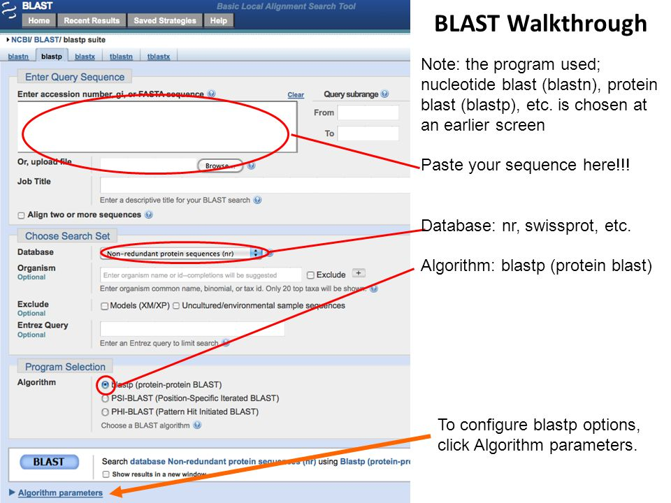BLAST Walkthrough Note: the program used; nucleotide blast (blastn), protein blast (blastp), etc. is chosen at an earlier screen Paste your sequence h