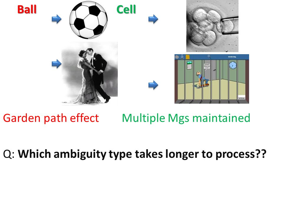 BallCell Ball Cell Garden path effect Multiple Mgs maintained Q: Which ambiguity type takes longer to process??