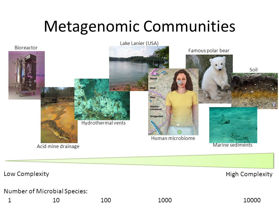 Metagenomic Communities Low Complexity High Complexity Bioreactor Acid mine drainage Hydrothermal vents Lake Lanier (USA) Human microbiome Famous pola
