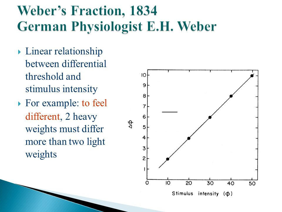  Linear relationship between differential threshold and stimulus intensity  For example: to feel different, 2 heavy weights must differ more than two light weights