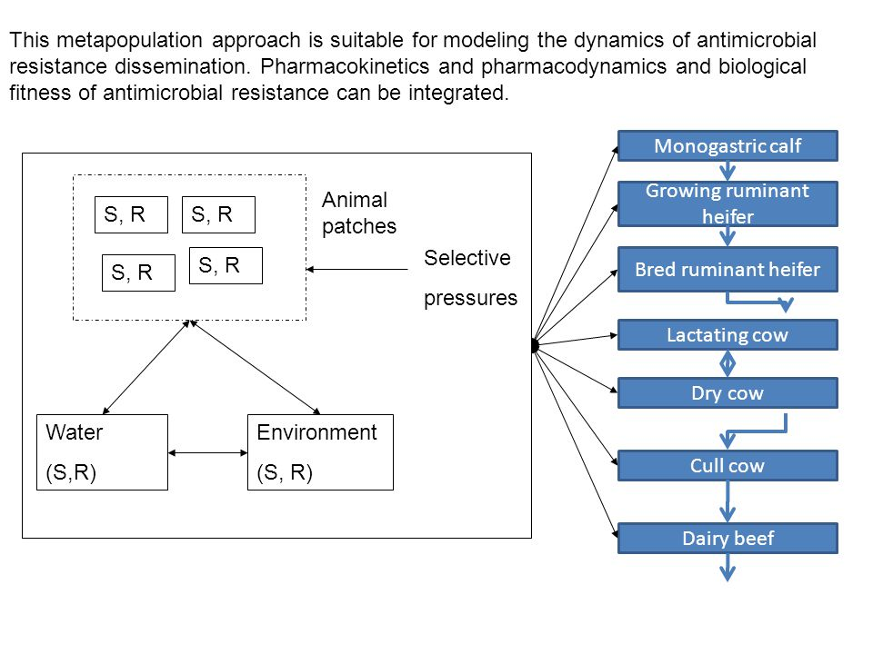 Monogastric calf Growing ruminant heifer Lactating cow Bred ruminant heifer Dry cow Cull cow Dairy beef S, R Animal patches Selective pressures Environment (S, R) Water (S,R) This metapopulation approach is suitable for modeling the dynamics of antimicrobial resistance dissemination.